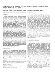 Apoptosis of Bovine Granulosa Cells After Serum Withdrawal Is