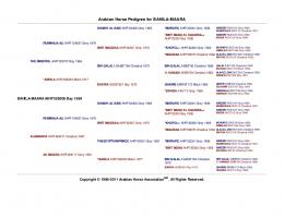 Arabian Horse Pedigree for BAHILA-MAARA - Skyhaven Arabians