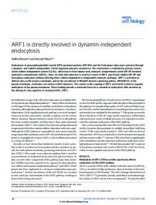 ARF1 is directly involved in dynamin-independent endocytosis