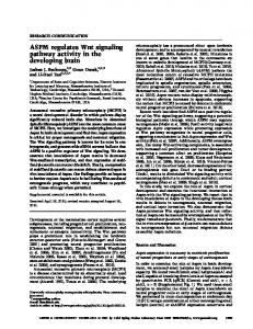 ASPM regulates Wnt signaling pathway activity in the developing brain
