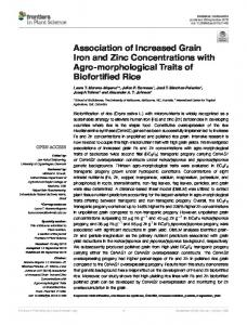 Association of Increased Grain Iron and Zinc Concentrations with Agro ...