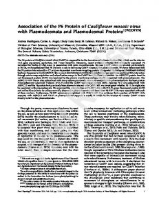 Association of the P6 Protein of Cauliflower mosaic ...