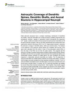 Astrocytic Coverage of Dendritic Spines, Dendritic ...
