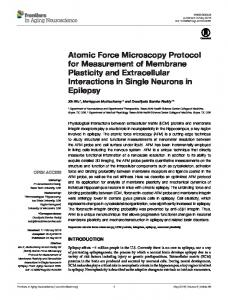 Atomic Force Microscopy Protocol for Measurement of ... - Frontiers