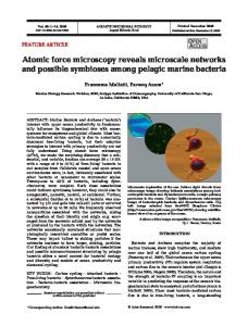 Atomic force microscopy reveals microscale networks and possible ...
