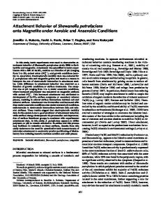 Attachment Behavior of Shewanella putrefaciens onto Magnetite
