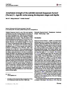 Attachment strength of the subtidal seaweed ... - Springer Link