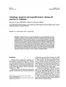 Autophagy, apoptosis and organelle features during cell ... - SciELO