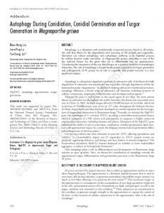 Autophagy During Conidiation, Conidial Germination and Turgor ...