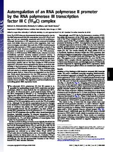 Autoregulation of an RNA polymerase II promoter by the RNA ...