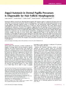 Autotaxin in Dermal Papilla Precursors Is Dispensable for ... - Research