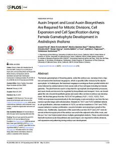 Auxin Import and Local Auxin Biosynthesis Are Required for ... - PLOS