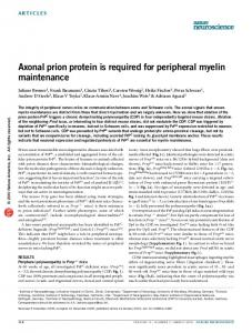 Axonal prion protein is required for peripheral myelin ... - Nature