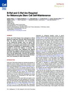 B-Raf and C-Raf Are Required for Melanocyte Stem Cell ... - Cell Press