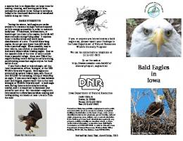 Bald Eagles in Iowa - Iowa Department of Natural Resources