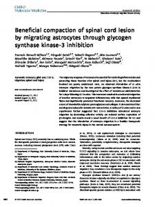 Beneficial compaction of spinal cord lesion by migrating astrocytes