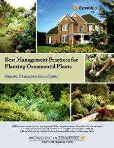 Best Management Practices for Planting Ornamental Plants