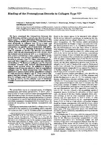 Binding of the Proteoglycan Decorin to Collagen Type VI*