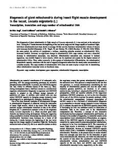 Biogenesis of giant mitochondria during insect ... - Wiley Online Library