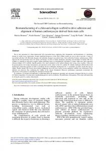 Biomanufacturing of a Chitosan/Collagen Scaffold to ...