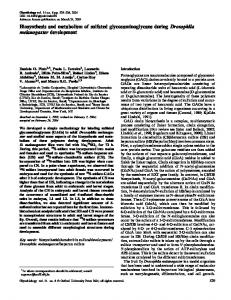 Biosynthesis and metabolism of sulfated glycosaminoglycans during ...