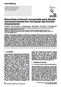 Biosynthesis of bismuth nanoparticles using Serratia