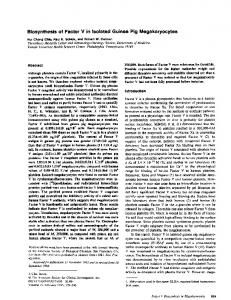 Biosynthesis of Factor V in Isolated Guinea Pig Megakaryocytes ...