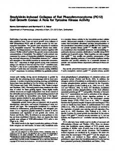 Bradykinin-Induced Collapse of Rat Pheochromocytoma - Journal of ...