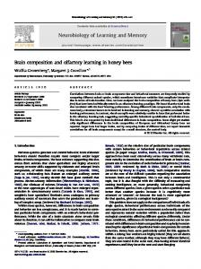 Brain composition and olfactory learning in honey bees