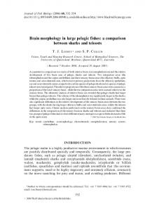 Brain morphology in large pelagic fishes: a ...