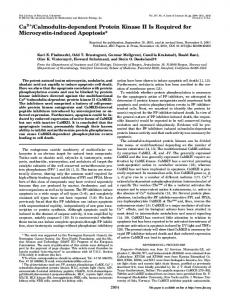 Ca2 /Calmodulin-dependent Protein Kinase II Is Required for ...
