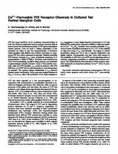 Ca2+ -Permeable P2X Receptor Channels in Cultured Rat Retinal ...