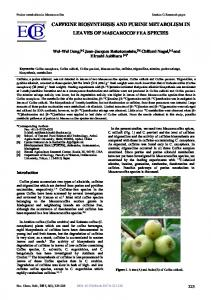 caffeine biosynthesis and purine metabolism in