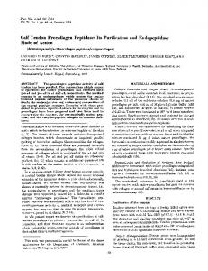Calf Tendon Procollagen Peptidase: Its Purification and ... - Europe PMC