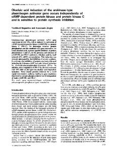 cAMP-dependent protein kinase and protein kinase C ... - Europe PMC