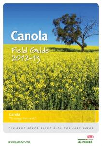 Canola Field Guide - Pioneer