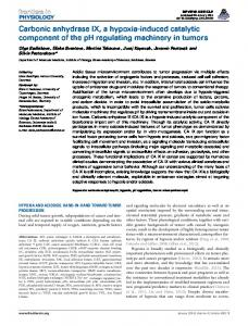 Carbonic anhydrase IX, a hypoxia-induced catalytic ... - Frontiers