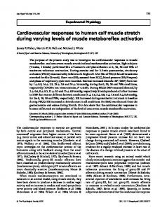 Cardiovascular responses to human calf muscle ... - Wiley Online Library