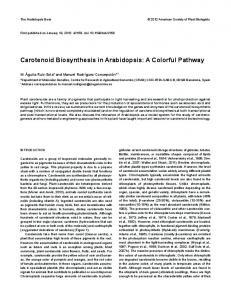 Carotenoid Biosynthesis in Arabidopsis: A Colorful Pathway - BioOne
