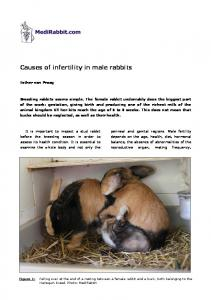Causes of infertility in male rabbits - Medirabbit