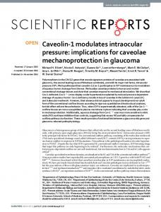Caveolin-1 modulates intraocular pressure: implications for ... - Nature