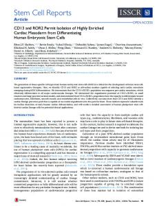 CD13 and ROR2 Permit Isolation of Highly Enriched ... - Cell Press