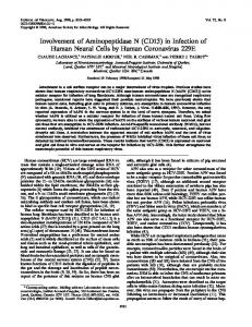 (CD13) in Infection of Human Neural Cells by Human Coronavirus 229E