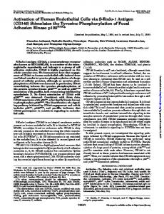 CD146 - Journal of Biological Chemistry