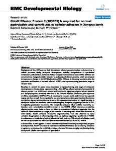 Cdc42 Effector Protein 2 (XCEP2) is required for normal gastrulation ...