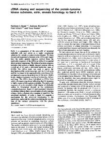 cDNA cloning and sequencing of the protein-tyrosine - Europe PMC