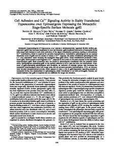 Cell Adhesion and Ca2 Signaling Activity in Stably Transfected ...