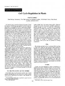 Cell Cycle Regulation in Plants