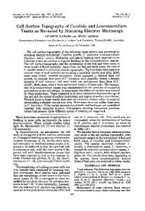 Cell Surface Topography of Candida and Leucosporidium Yeasts as ...