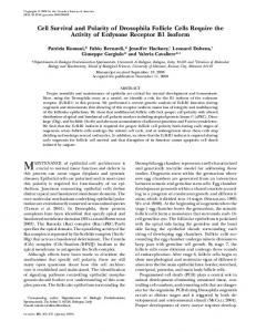 Cell Survival and Polarity of Drosophila Follicle Cells ... - Genetics